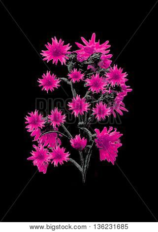 Isolated Flowers Over Black