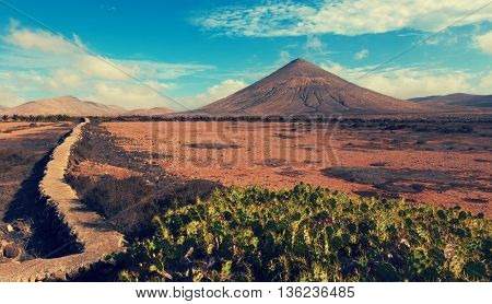 cacti and the volcano on the horizon, the Canary Islands. Toned image