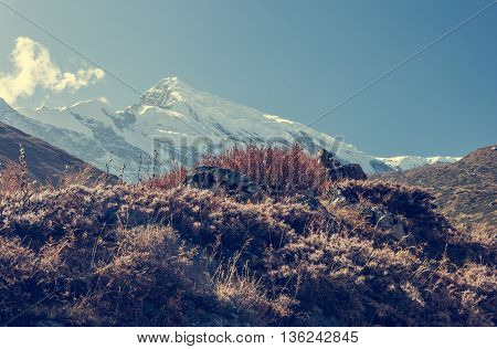 Majestic mountain covered with snow. Autumn foliage in foreground, Annapurna region in Nepal.