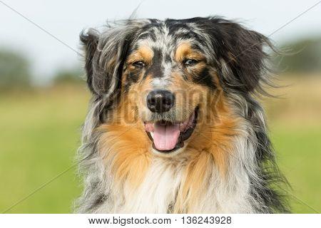 Multicolored Dog In Nature