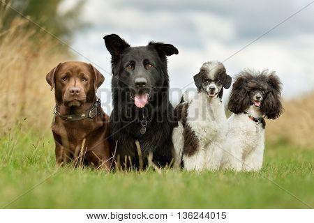 A Dog Family