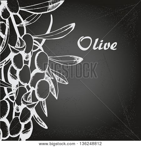 Vector sketch of olive tree branch. for design