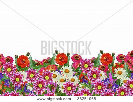 Zinnia flowers chamomile; bluebells; campanula. colorful flowers