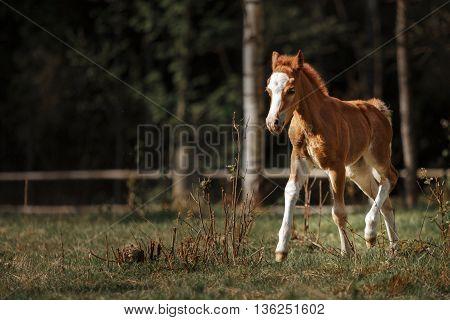 Foal Walking Paddock