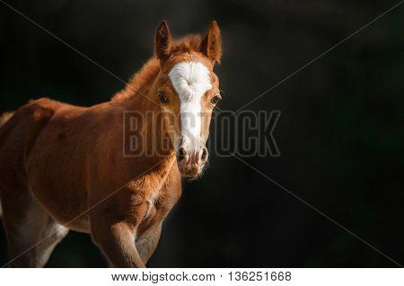 foal walking in an open paddock in the forest