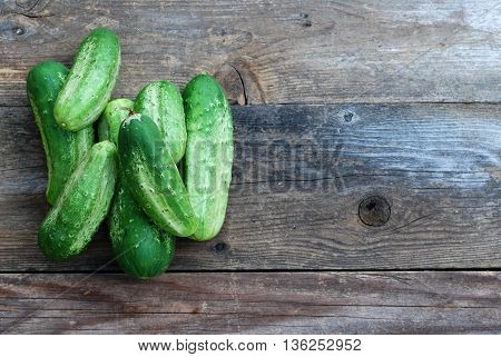 Freshly picked garden grown cucumbers in the summer