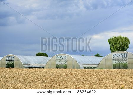 The image of a wheat field in Rovigo, Italy
