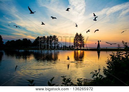A flock of birds feeding off the water during sunset