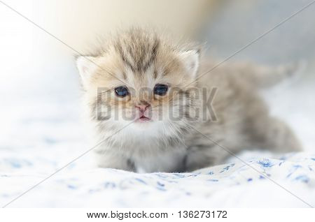 Close up Cute tabby kittens sitting on bed