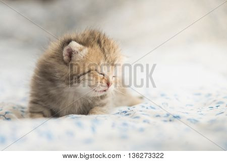 Close up Cute tabby kittens sleeping on bed