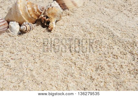 sea shells with sand as background on the beach