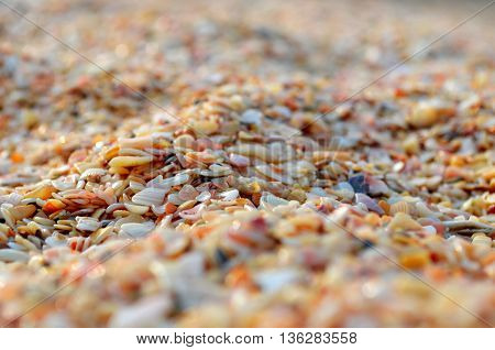 A lot of small sea shells on the sea shore.Close-up texture for background seashells on the shore.