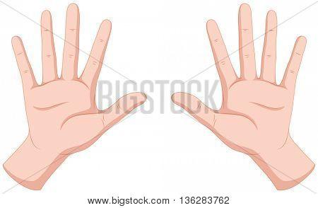 Human hands on white background illustration
