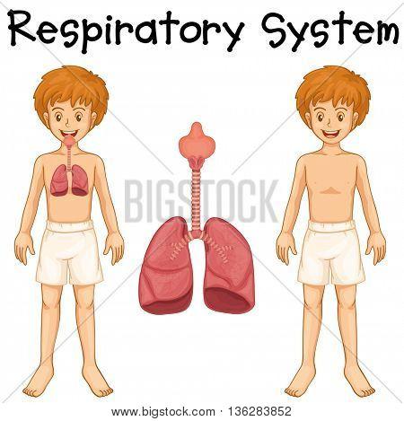 Respiratory system in boy illustration
