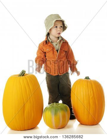 An adorable preschooler mildly upset because he can't lift the pumpkin he wants for Halloween.  On a white background.