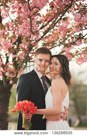 Stylish Loving wedding couple kissing and hugging near tree with blossoms.