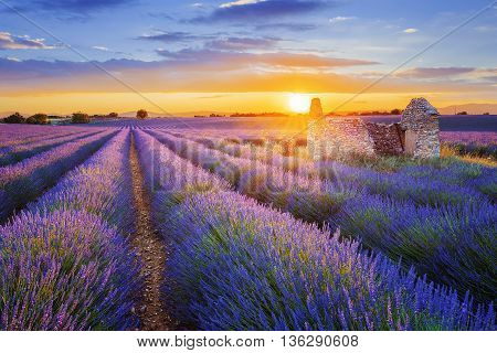 Sun is setting over a beautiful purple lavender filed in Valensole. Provence France