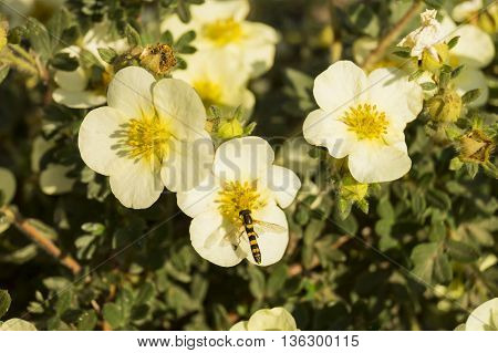 White flowers with orange stamen grow on background of green plants