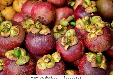 close up mangosteen in the fruit market triopical fruit in the market