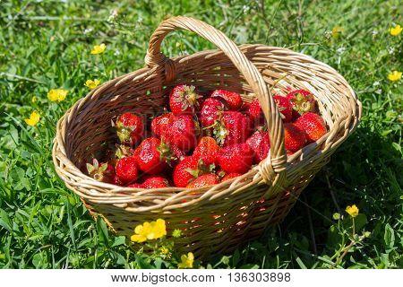 half empty basket of strawberries on the grass