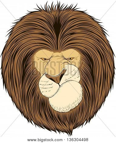 Vector illustration lion stern king of beasts on a white background