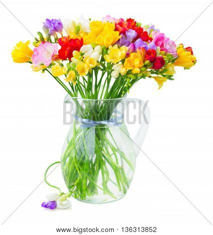 Bunch of Fresh multicolored freesia flowers in glass vase isolated on white background