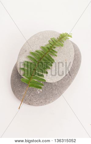 Two stones and fern leaf