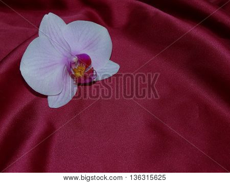 beautiful Orchid lying on the red silk that laid in the crease