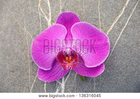 Pink orchid with stone texture