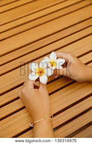 woman hands holding white frangipani