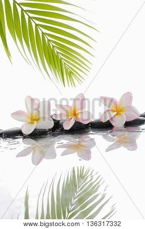zen black stones and Frangipani and palm leaf