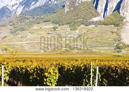 vineyards in Ardon region, canton Valais, Switzerland