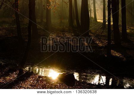 Bright reflection of the rising sun in a forest pool surrounded by shadows and beams of light as the rising sun penetrates mist between the trees in the forest