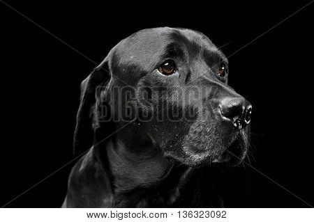 Sad Black Mixed Breed Dog With Beautiful Eyes Portrait In A Black Studio