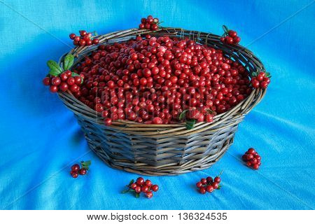 Delicious ripe cranberries in a wooden basket stands on a blue tablecloth