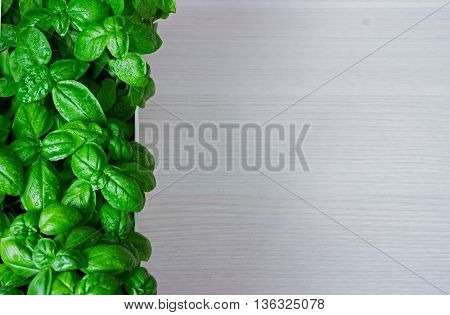 green basil leaves on wooden background with copypaste space