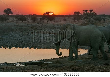 A fiery sunset with elephants at a waterhole in Namibia