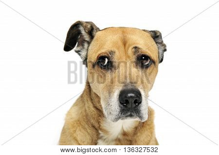 Afraid Mixed Breed Dog In A White Background