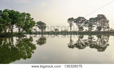 Reflection of Trees beside of the lake