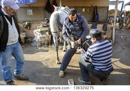 Istanbul Turkey - December 18 2013: Farrier. Horse's hoof nailing on shoes. Nail care of the horses phaeton car on Buyukada and master farrier who shoe. A farrier is a specialist in equine hoof care including the trimming and balancing of horses' hooves a