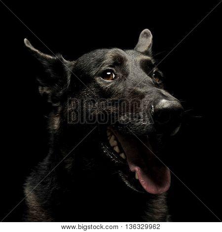 Black German Shepherd Dog In A Dark Studio