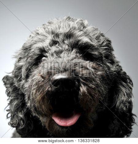 Puppy Pumi Feeling Good In A White Photo Studio
