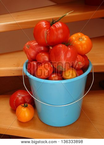 A bucket full of ripe tomatoes on the stairway.