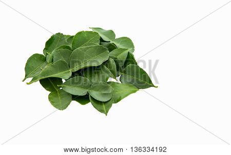 kaffir lime leaves nontoxic when put  stacked on a white background