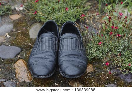 wet black leather shoes with water drops in garden