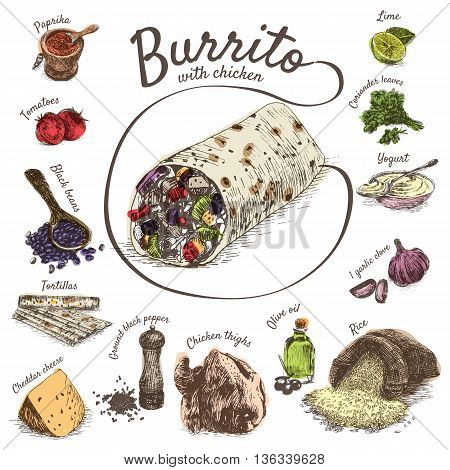 Vector illustration of burrito ingredients. Hand drawn colorful illustration on white background