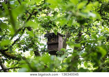 Little Birdhouse in Spring surrounded by green trees and boughs