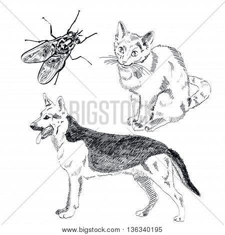 German Shepherd hand drawn vector isolated on white background EPS