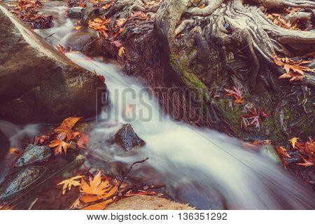 The forest creek in autumn