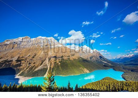 Mountain Lake as a wolf head is popular among tourists. Turquoise Lake Peyto in Banff National Park